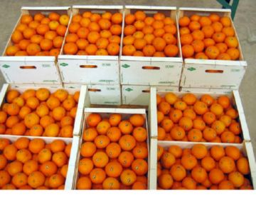 консервант Е230 в мандаринах