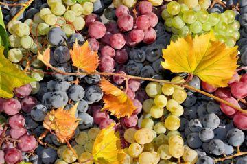антиоксиданты в виноградном соке