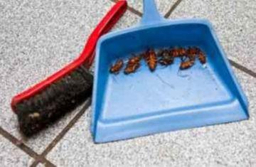 Е284 против тараканов