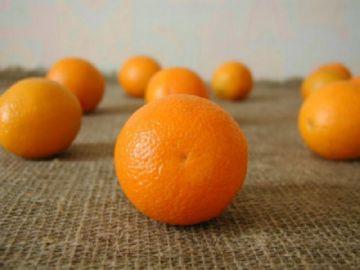 хранение цитрусовых в домашних условиях