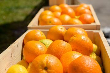 сохранение ифруктов при помощи пищевых добавок